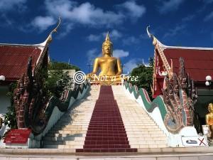 Тайланд эмиграция