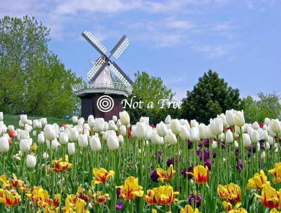 Коммунальные затраты в Нидерландах