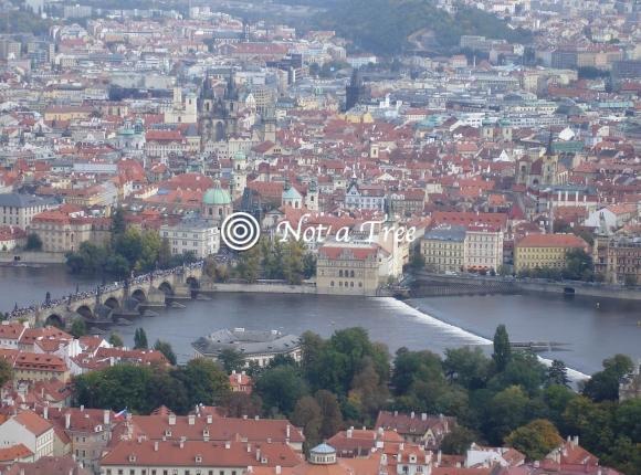 Как из чешской визы сделать ВНЖ