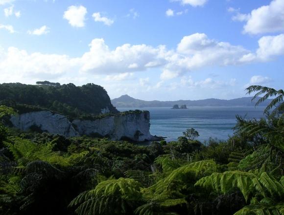 Подробнее о типах ВНЖ в Новой Зеландии