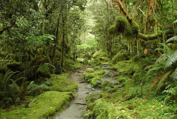Хорошее в Новой Зеландии